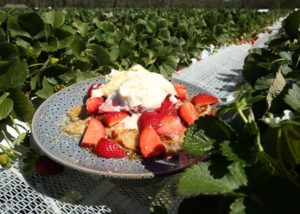 Strawberry _ Buttermilk Pancakes recipe - The Cooks Pantry
